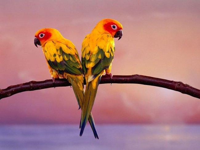 Домашний попугай: какого выбрать